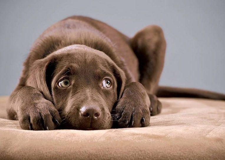 crier chien effets psychologiques negatifs long terme