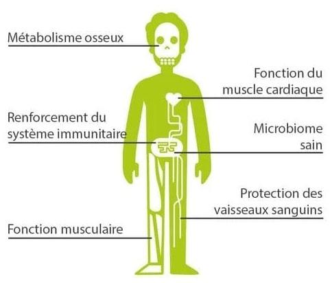 effets vitamine D organime
