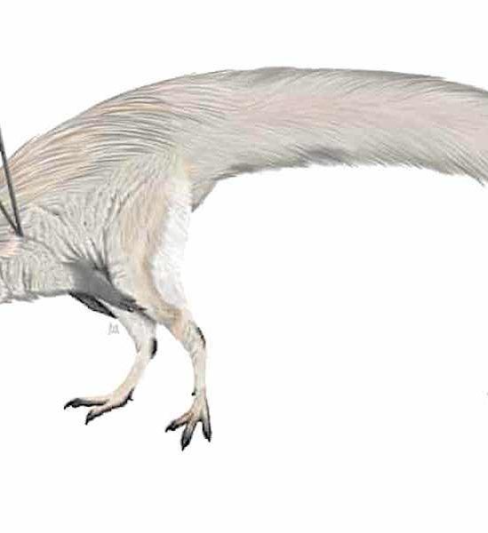 etrange dinosaure ubirajara jubatus fascine scientifiques monde entier