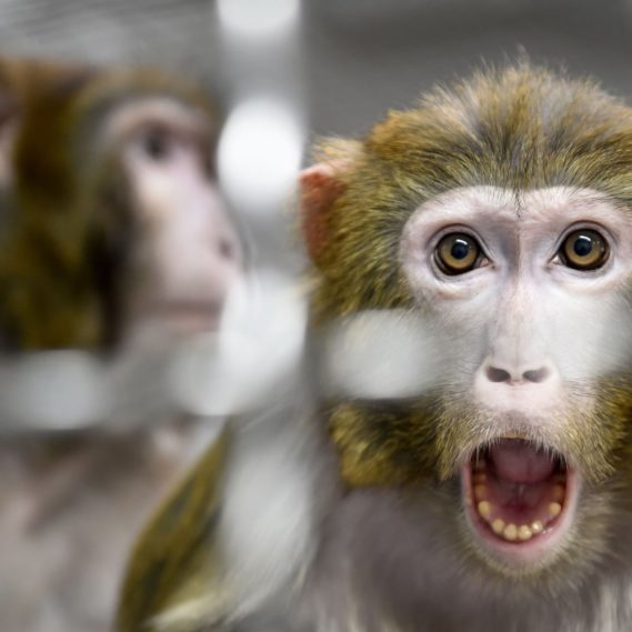 euthanasie singes NASA