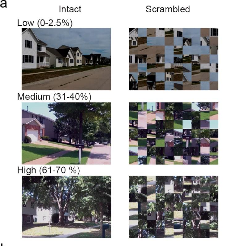 images densité verdure