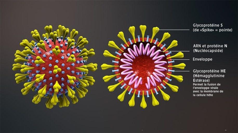 nouvelle variante coronavirus impact vaccins