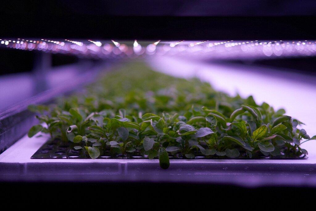 plants ferme verticale danemark