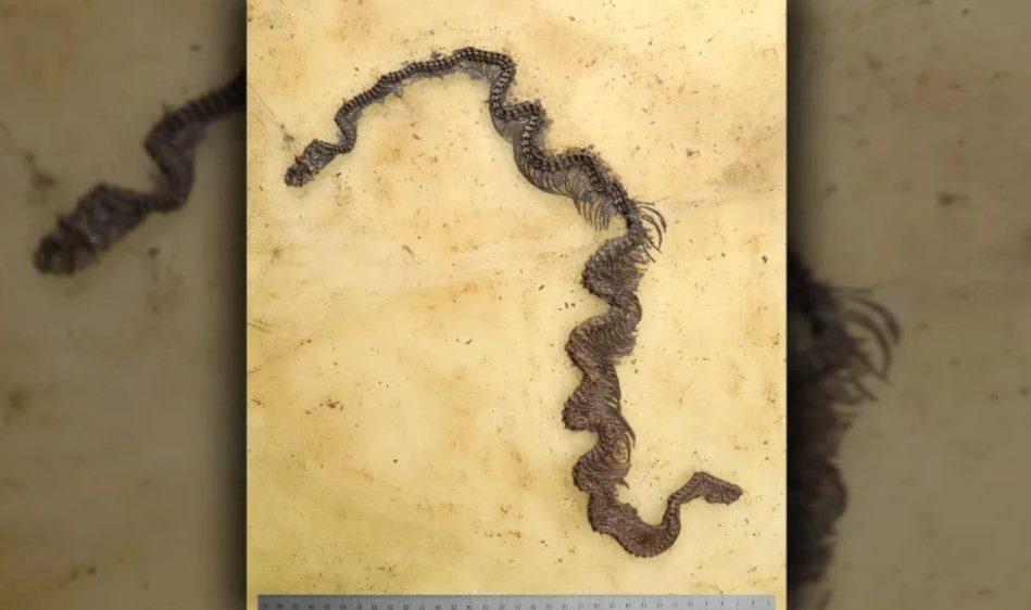 plus ancien fossile python