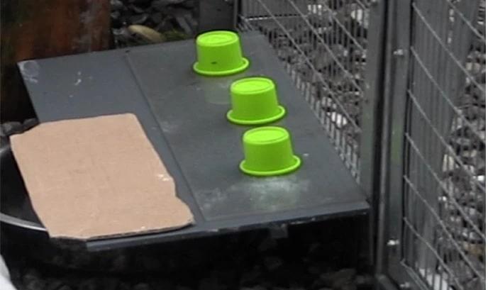 protocole experimental tets corbeaux