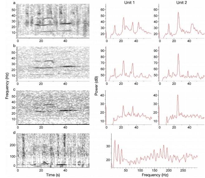 spectrogrammes chant baleine bleue
