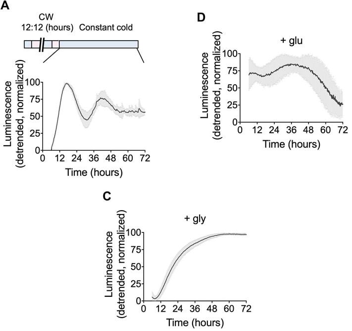 bacterie temperature glucose glycerol