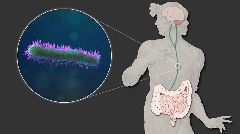 cellules cerebrales luttent contre inflammation instructions microbiome
