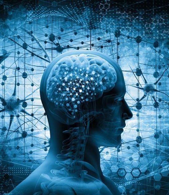 chercheurs identifient mecanisme majeur vieillissement cerebral
