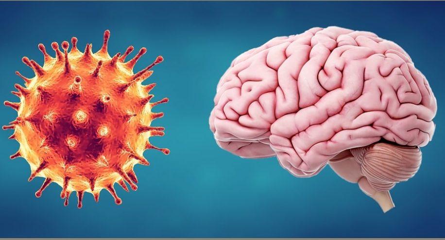 comment covid affecte cerveau