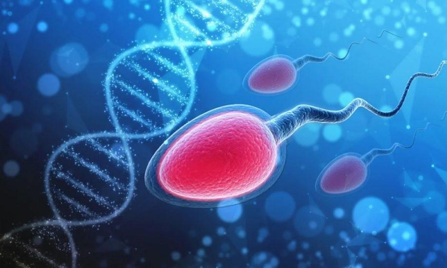 covid19 pourrait reduire fertilite masculine