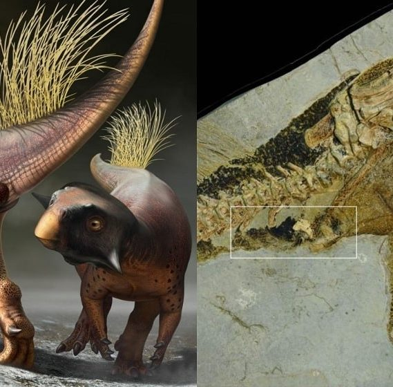 decouverte anus dinosaure bien conserve