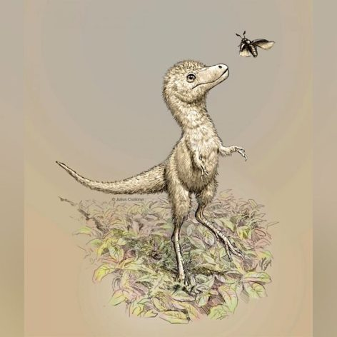 decouverte embryons dinosaures aide percer mystere bebes tyrannosaures