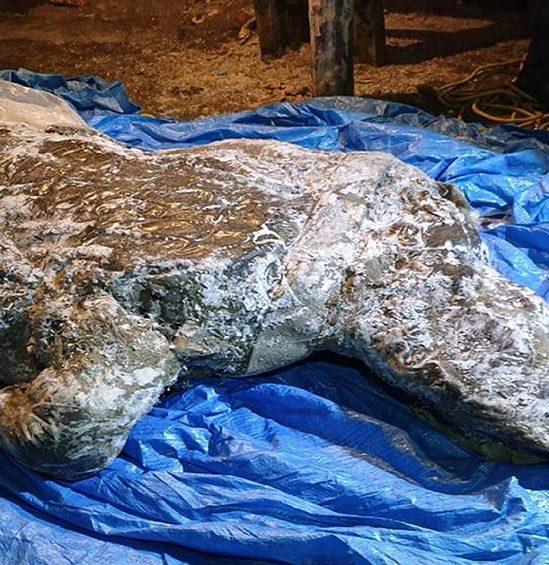 decouverte rhinoceros laineux bien conserve siberie