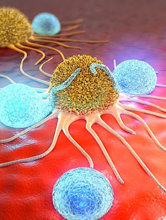 eliminer cancer liberant systeme immunitaire