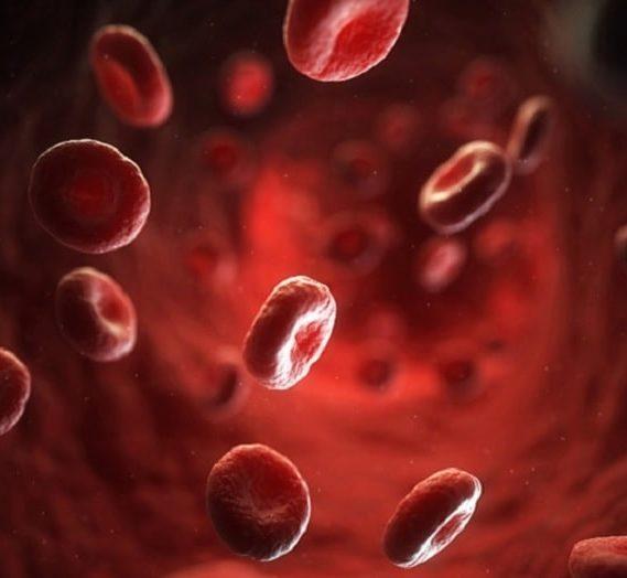 hemoglobine provient gene unique transmis animaux ancetre commun