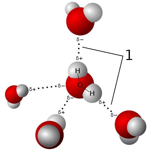 liaisons hydrogène eau