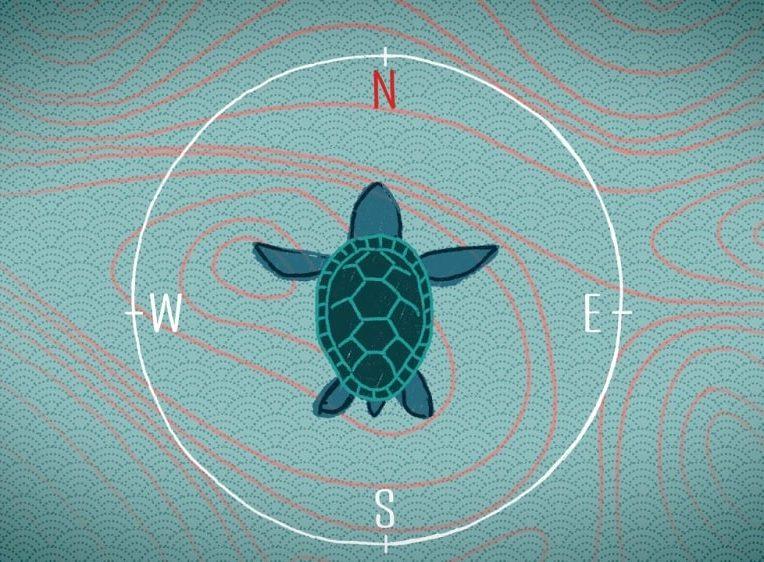 mecanique quantique permet animaux detecter champs magnetiques