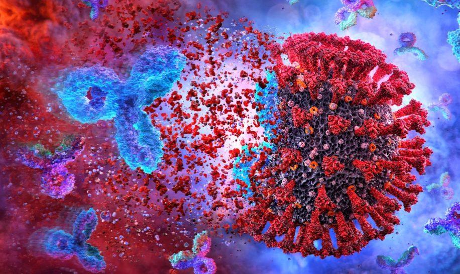 nouvel anticorps protege sars-cov-2 et variants empeche mutations