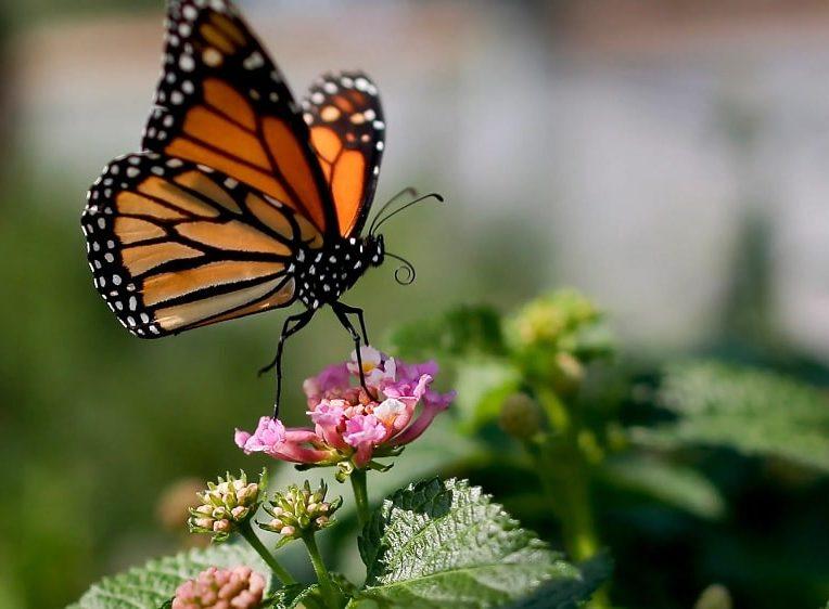 populations insectes declinent rapidement travers monde