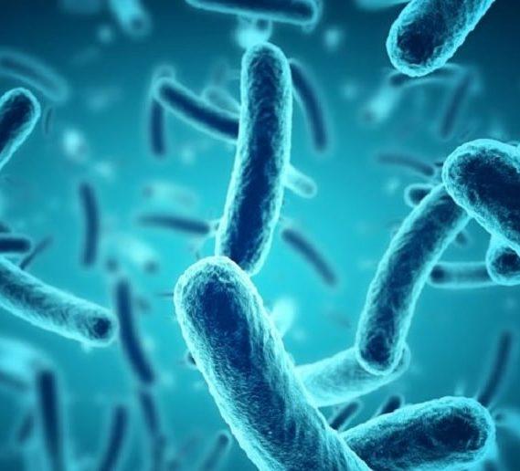 pour bacteries aussi heure importante