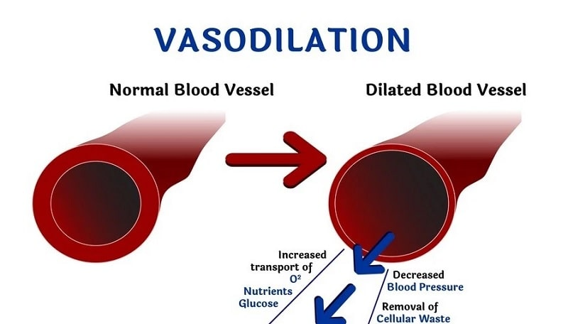 schema vasodilatation benefices
