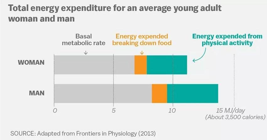 bilan consommation energie corps humain