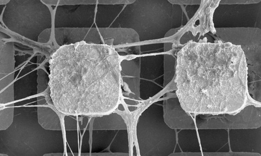 cellules cerveau puces électroniques IA