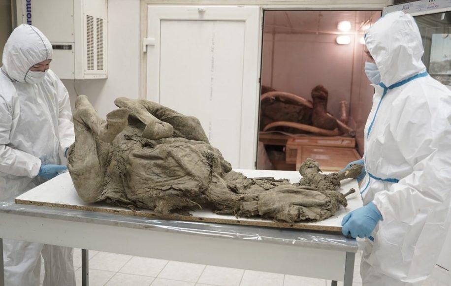 chercheurs russes traquent virus prehistoriques pergelisol