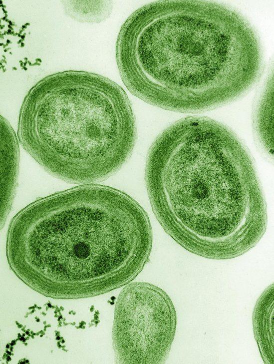 cycle hydrocarbures océans cyanobactéries