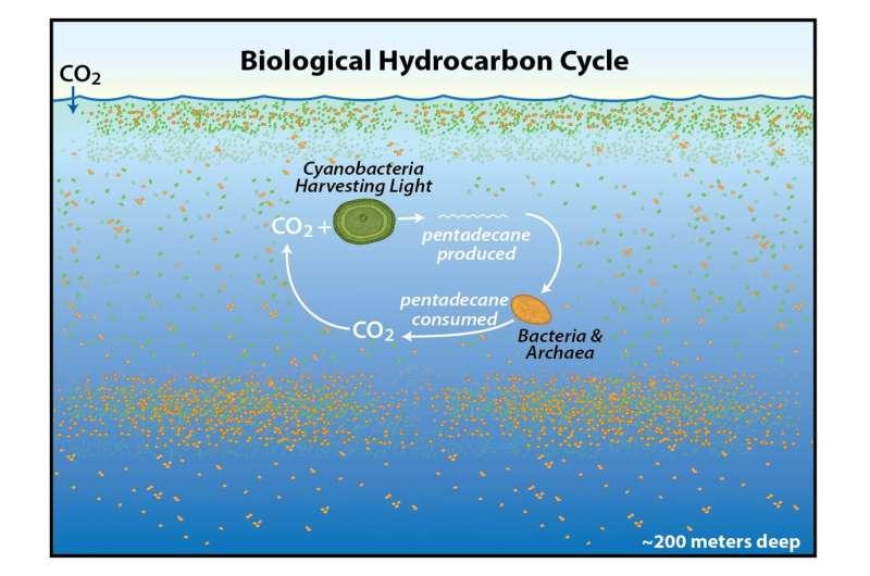 cycle hydrocarbures océans