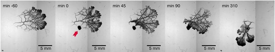 evolution architecture cellulaire-