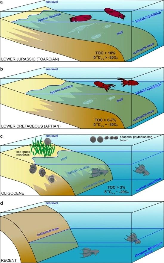 evolution calmar vampire profondeurs