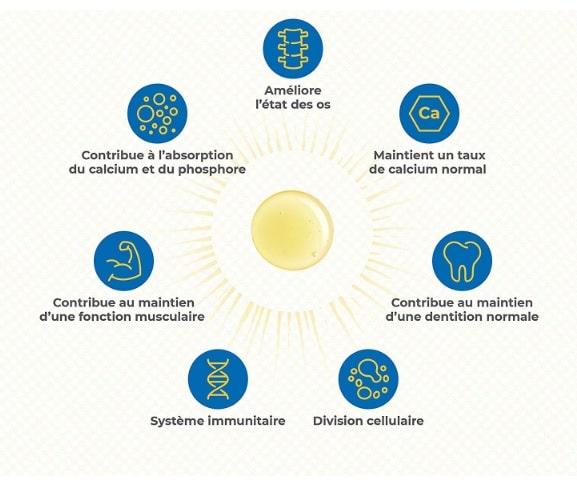 fonctions vitamine d organisme