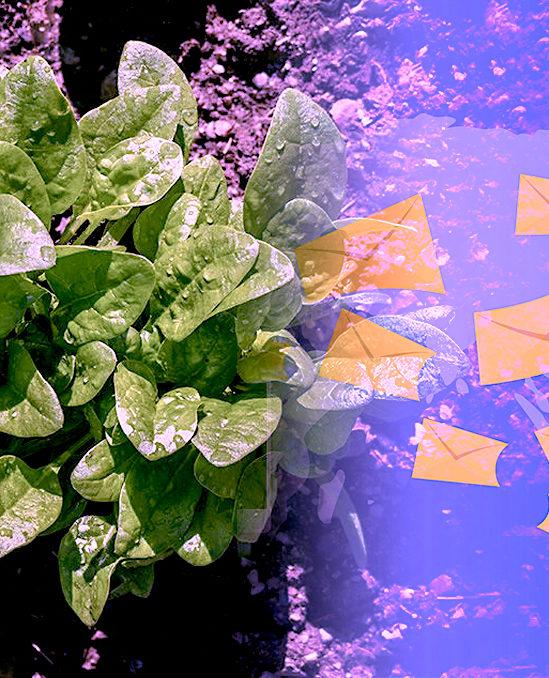 plants epinards envoient mails detection explosifs