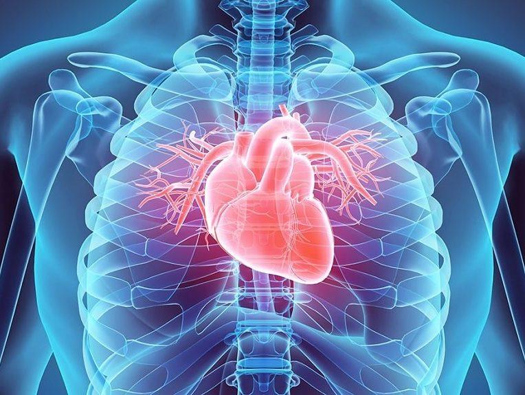 pourquoi cancer coeur est extrememement rare
