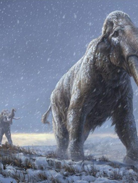 record ADN ancien mammouth