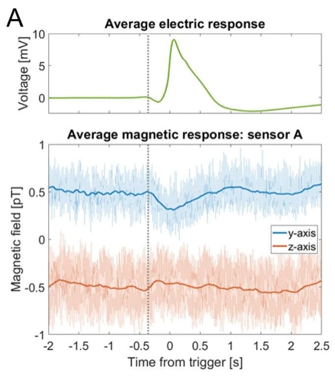 signaux magnétiques plante