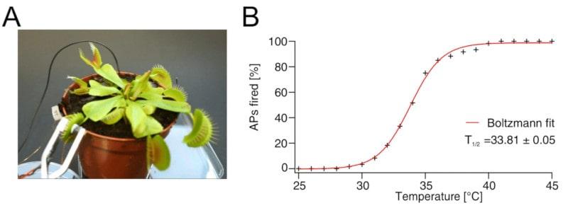 stimulation thermique plante carnivore