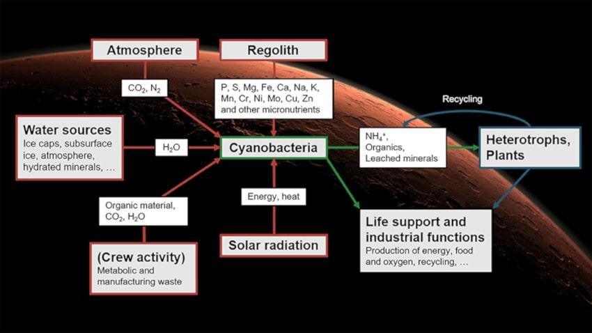 système survie cyanobactéries mars