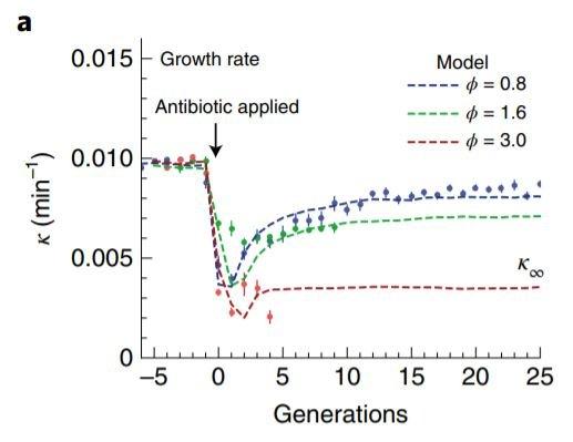 taux croissance bacteries selon concentration antibiotiques