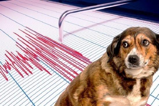animaux peuvent ils predire seismes