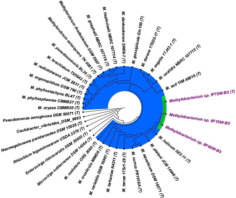 arbre phylogenetique genome bacteries