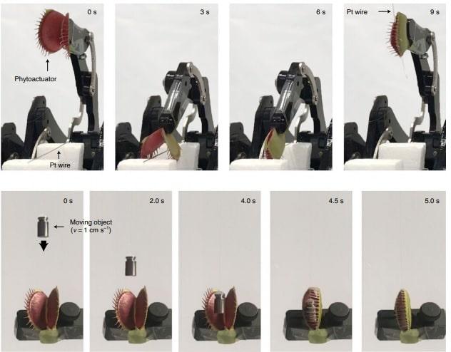 bras robotique plante carnivore