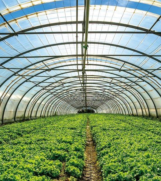 cellules solaires alimenter serres sans freiner croissance plantes