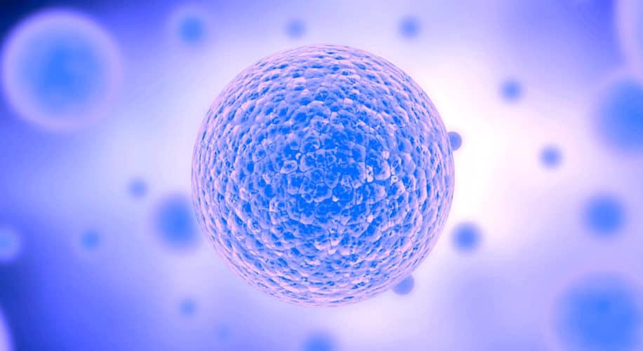 chercheurs creent cellule synthetique simple qui croit divise comme cellule naturelle