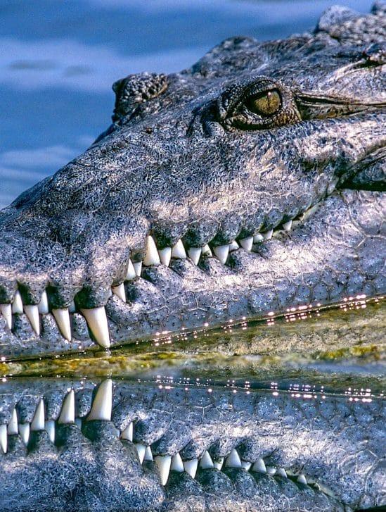 chercheurs decouvrent-mysterieuse loi universelle nature qui code forme dents griffes cornes