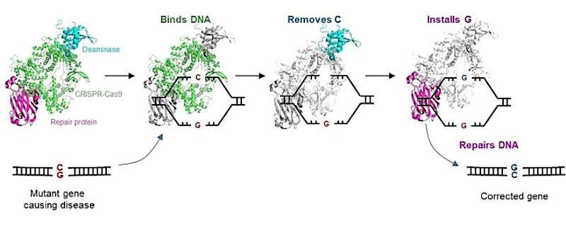editeur genes cgbe crispr