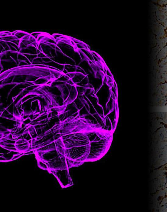 etude montre certains genes reprennent vie dans cerveau apres mort
