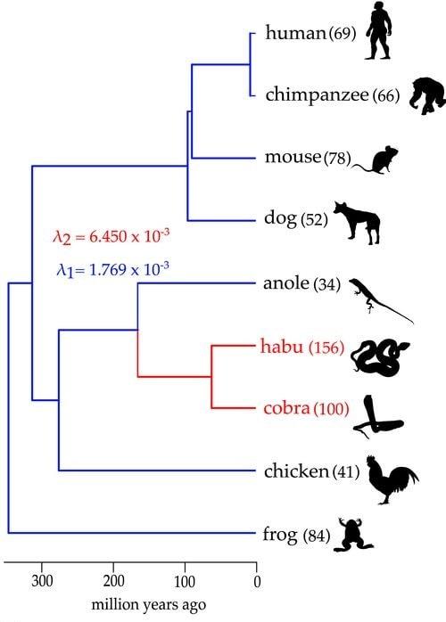 evolution systeme genes venin animaux